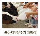 송아지우유주기 체험장